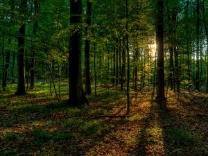 """Caminhada na natureza """"Karma Yoga - Expandindo a Consciência Através da Acção"""". Sintra 6 - Jun"""