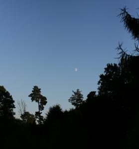 evening-moon--1430838-m