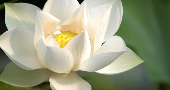 """Retiro de Primavera """"O Florescer do Lótus"""". Início a 24 Março. Sintra."""
