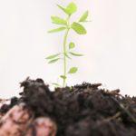 Curso Agricultura Biológica na Covilhã