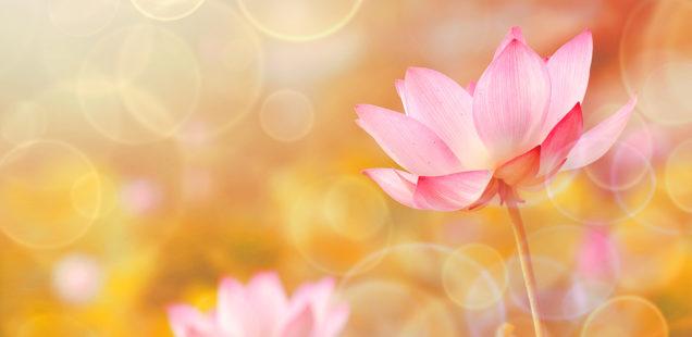 """Retiro de Yoga e Meditação de Ano Novo: """"Atração pelo Infinito"""""""